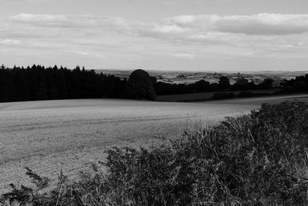 Black and white photo of a rolling field with trees in Ryedale